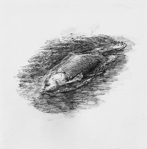 carp-mortblo